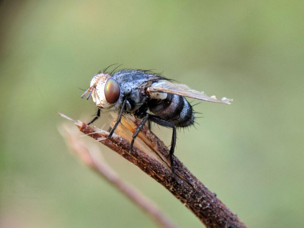 Zó hou je deze lente alle insecten buiten