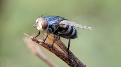 insecten buiten houden